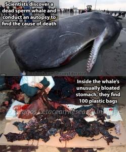 Plasticsperm-whale